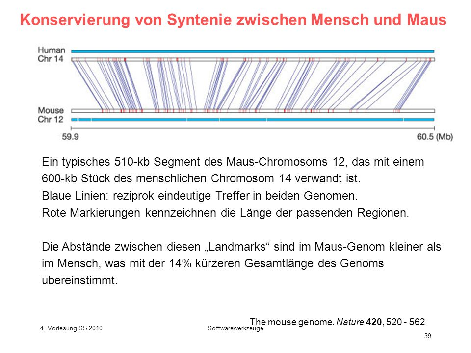 4.Vorlesung SS 2010Softwarewerkzeuge 39 The mouse genome.