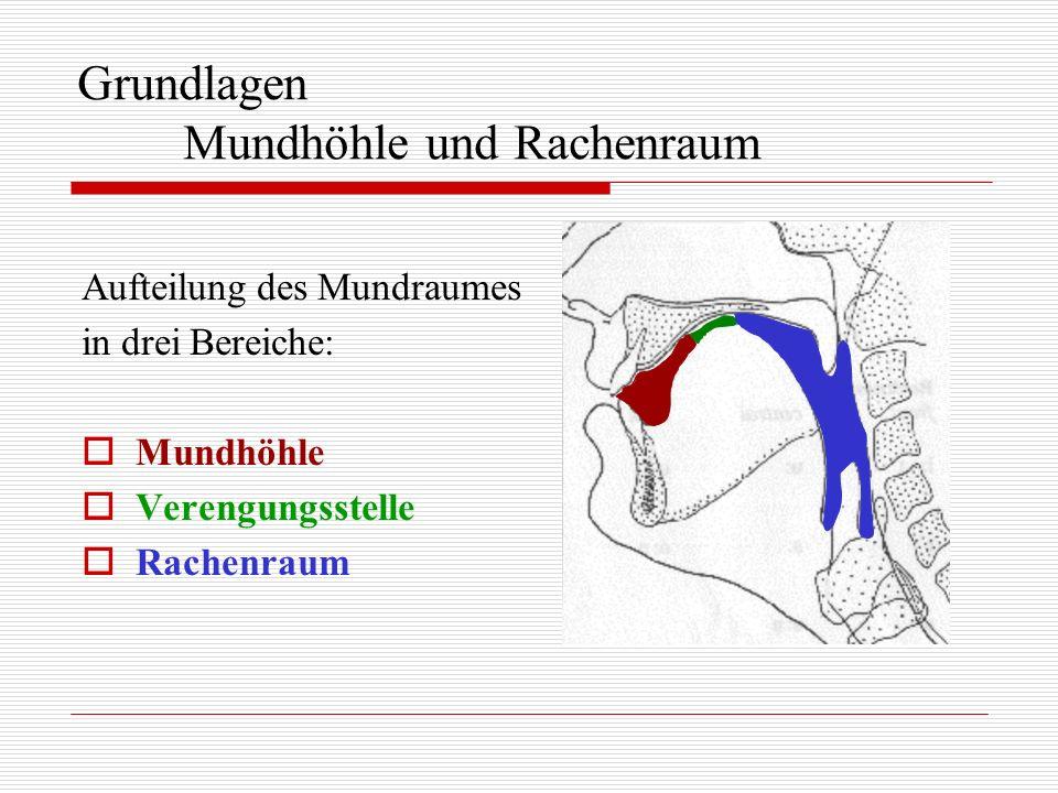 Grundlagen Mundhöhle und Rachenraum Aufteilung des Mundraumes in drei Bereiche: Mundhöhle Verengungsstelle Rachenraum