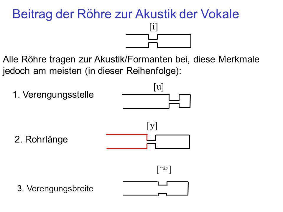 Beitrag der Röhre zur Akustik der Vokale Alle Röhre tragen zur Akustik/Formanten bei, diese Merkmale jedoch am meisten (in dieser Reihenfolge): 1. Ver
