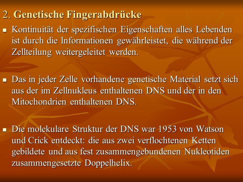 2. Genetische Fingerabdrücke Kontinuität der spezifischen Eigenschaften alles Lebenden ist durch die Informationen gewährleistet, die während der Zell