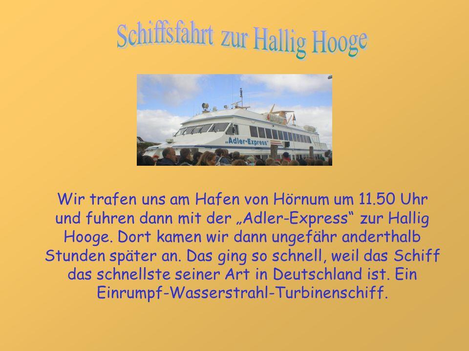 Wir trafen uns am Hafen von Hörnum um 11.50 Uhr und fuhren dann mit der Adler-Express zur Hallig Hooge. Dort kamen wir dann ungefähr anderthalb Stunde