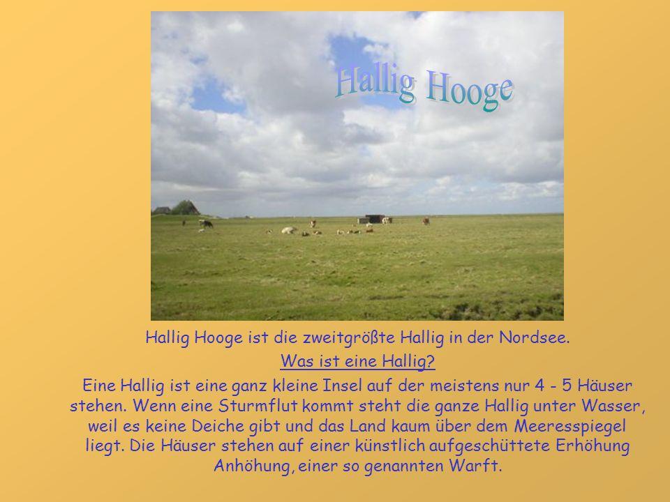 Hallig Hooge ist die zweitgrößte Hallig in der Nordsee. Was ist eine Hallig? Eine Hallig ist eine ganz kleine Insel auf der meistens nur 4 - 5 Häuser