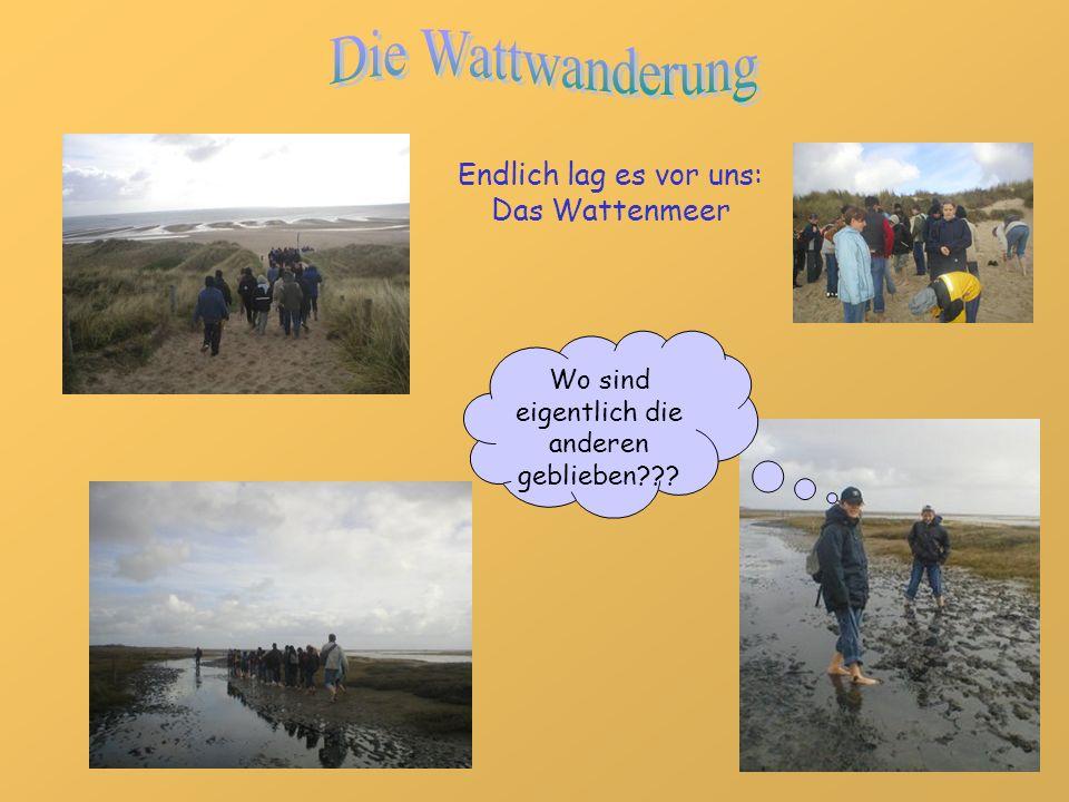 Endlich lag es vor uns: Das Wattenmeer Wo sind eigentlich die anderen geblieben???