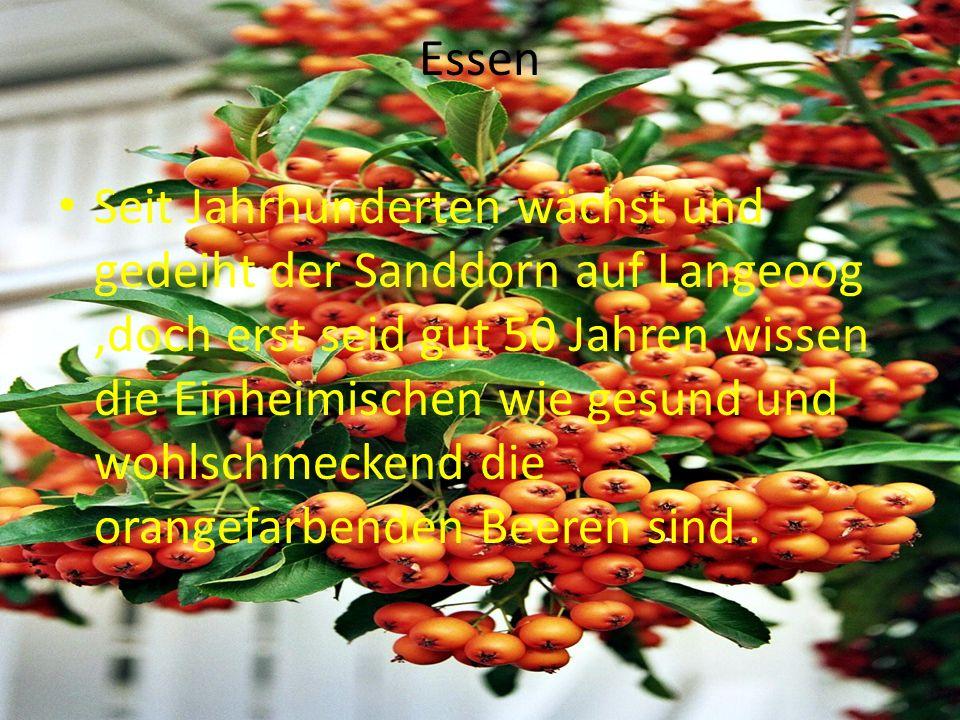 Essen Seit Jahrhunderten wächst und gedeiht der Sanddorn auf Langeoog,doch erst seid gut 50 Jahren wissen die Einheimischen wie gesund und wohlschmeckend die orangefarbenden Beeren sind.