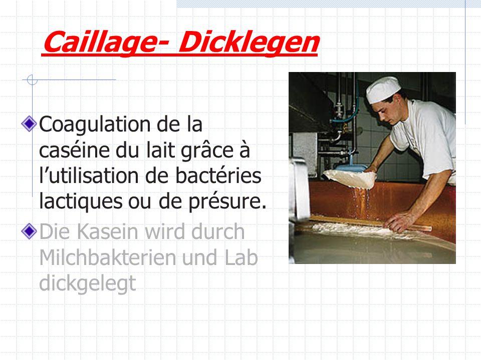 Caillage- Dicklegen Coagulation de la caséine du lait grâce à lutilisation de bactéries lactiques ou de présure. Die Kasein wird durch Milchbakterien