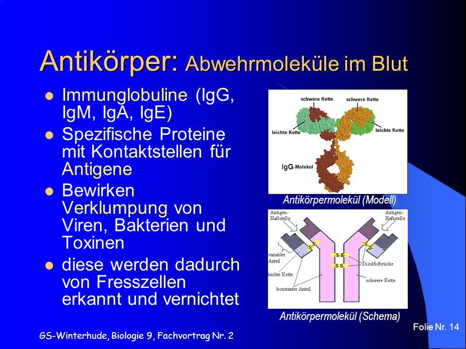 GS-Winterhude, Biologie 9, Fachvortrag Nr. 2 Folie Nr. 14 Antikörper: Abwehrmoleküle im Blut Immunglobuline (IgG, IgM, IgA, IgE) Spezifische Proteine