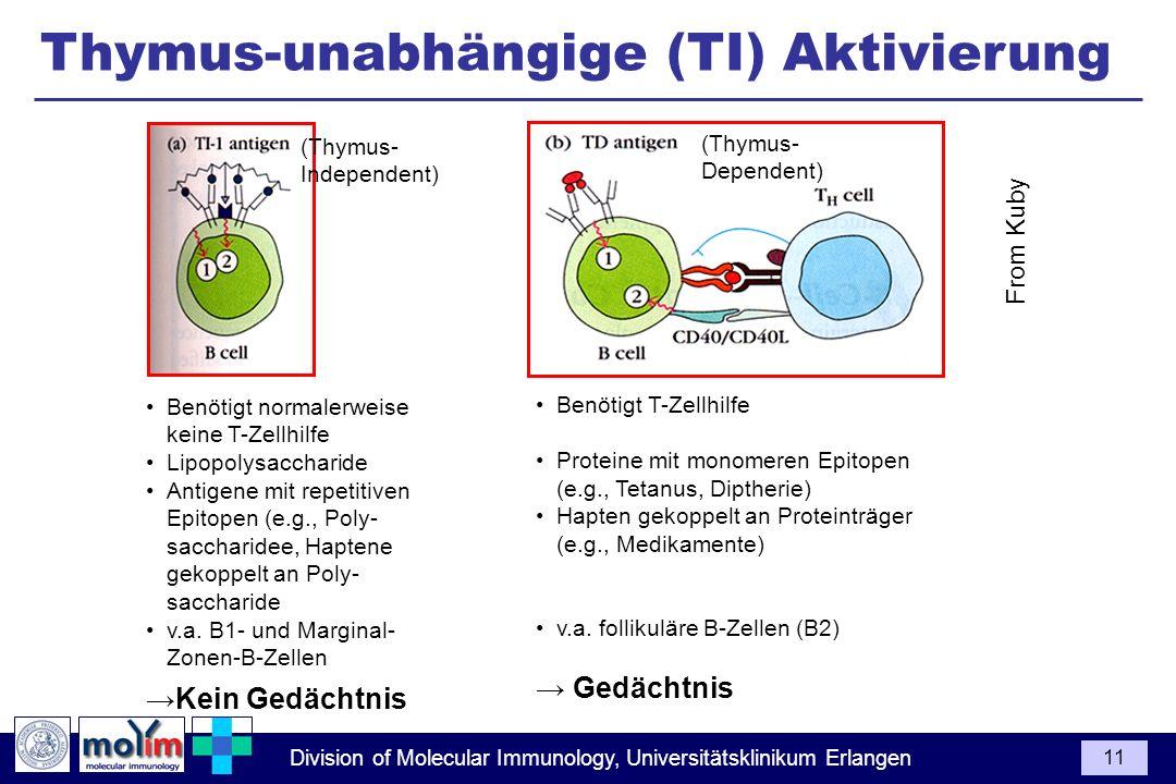 Division of Molecular Immunology, Universitätsklinikum Erlangen 11 From Kuby Benötigt normalerweise keine T-Zellhilfe Lipopolysaccharide Antigene mit