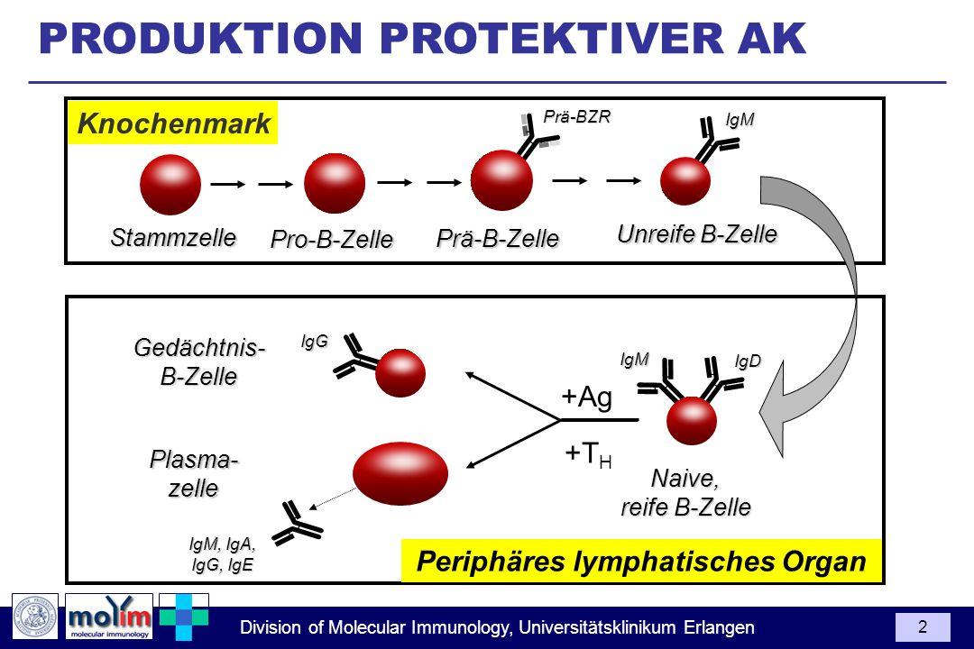Division of Molecular Immunology, Universitätsklinikum Erlangen 2 PRODUKTION PROTEKTIVER AK Plasma-zelle IgM, IgA, IgG, IgE Gedächtnis-B-Zelle Naive,