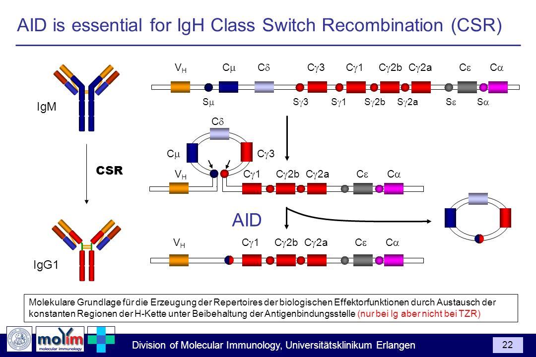 Division of Molecular Immunology, Universitätsklinikum Erlangen 22 Molekulare Grundlage für die Erzeugung der Repertoires der biologischen Effektorfun