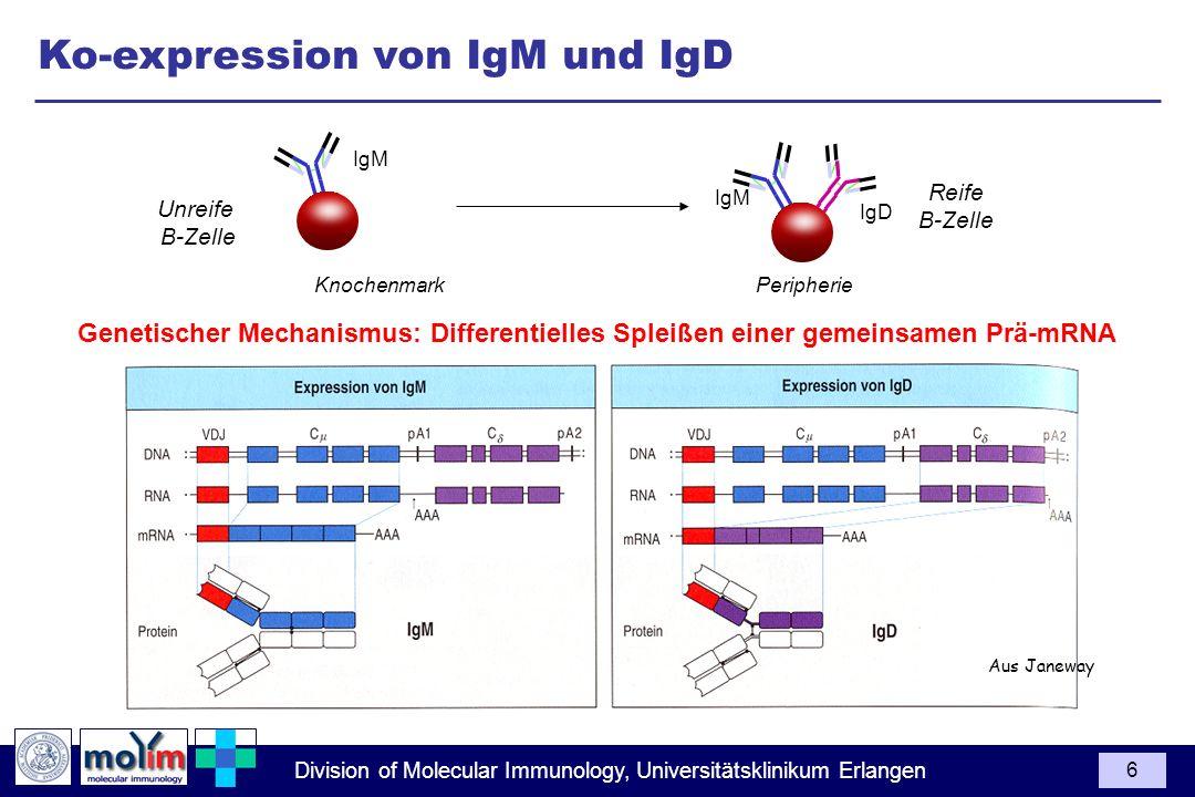 Division of Molecular Immunology, Universitätsklinikum Erlangen 6 Ko-expression von IgM und IgD Aus Janeway Unreife B-Zelle Reife B-Zelle Knochenmark