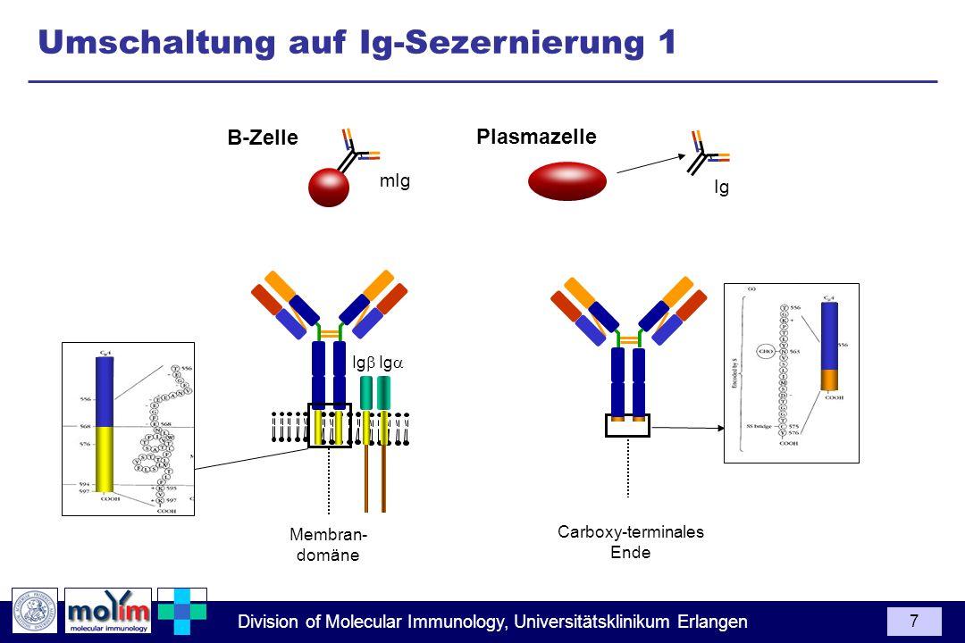 Division of Molecular Immunology, Universitätsklinikum Erlangen 7 Carboxy-terminales Ende Umschaltung auf Ig-Sezernierung 1 Ig Ig Membran- domäne mIg