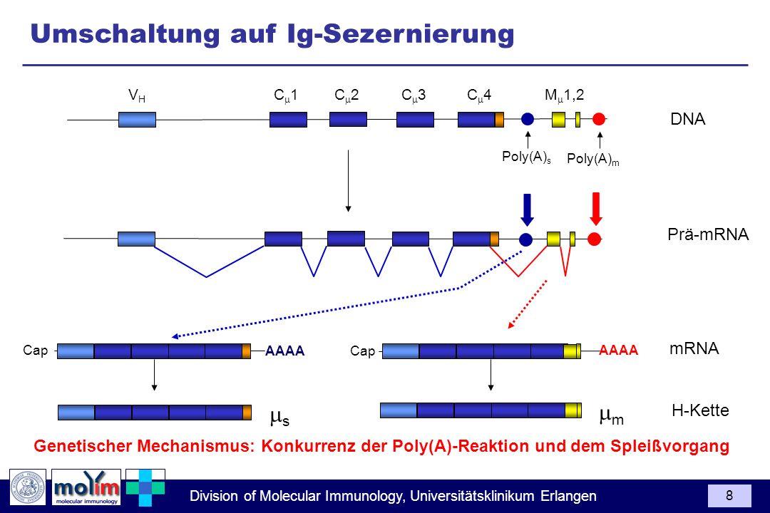 Division of Molecular Immunology, Universitätsklinikum Erlangen 8 DNA Poly(A) s Poly(A) m VHVH C 1C 3C 4C 2M 1,2 H-Kette s m mRNA Prä-mRNA AAAA Cap AA