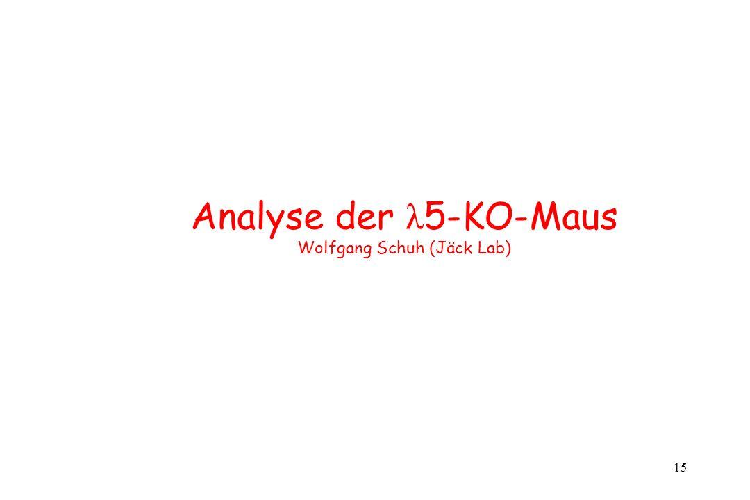 15 Analyse der λ 5-KO-Maus Wolfgang Schuh (Jäck Lab)