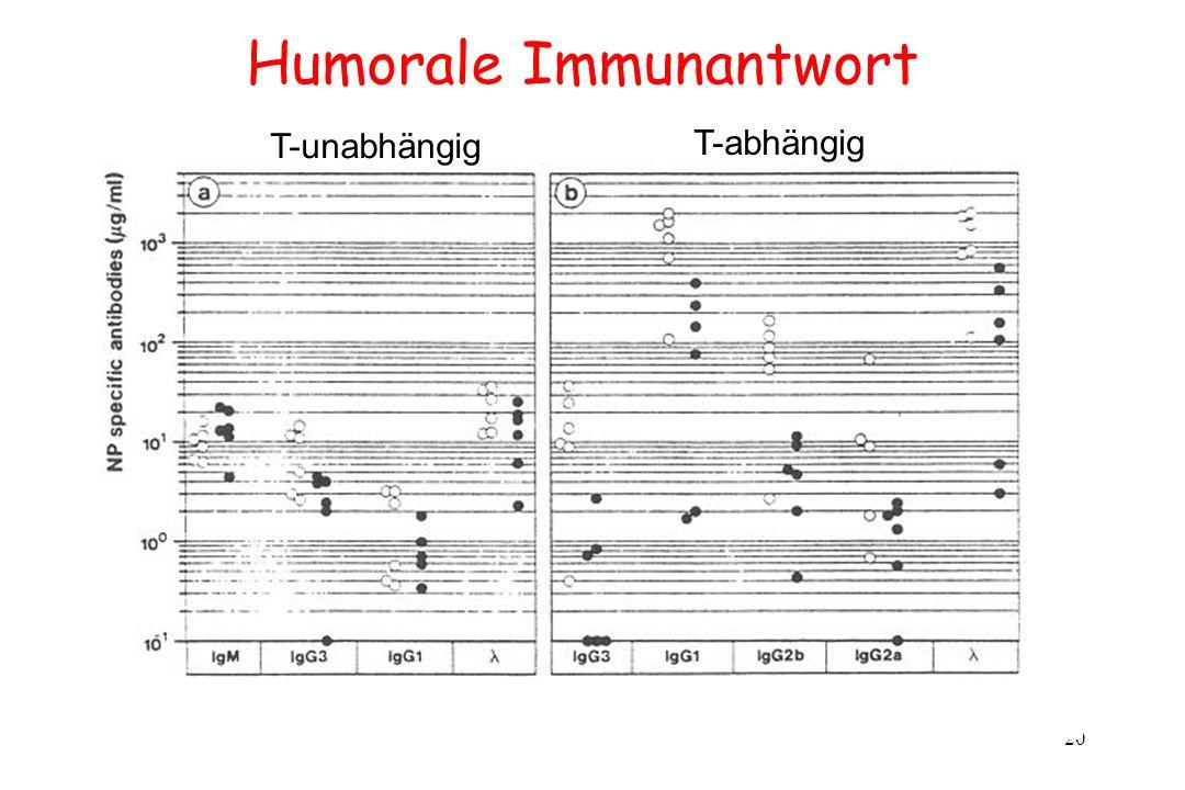 20 Humorale Immunantwort T-unabhängig T-abhängig