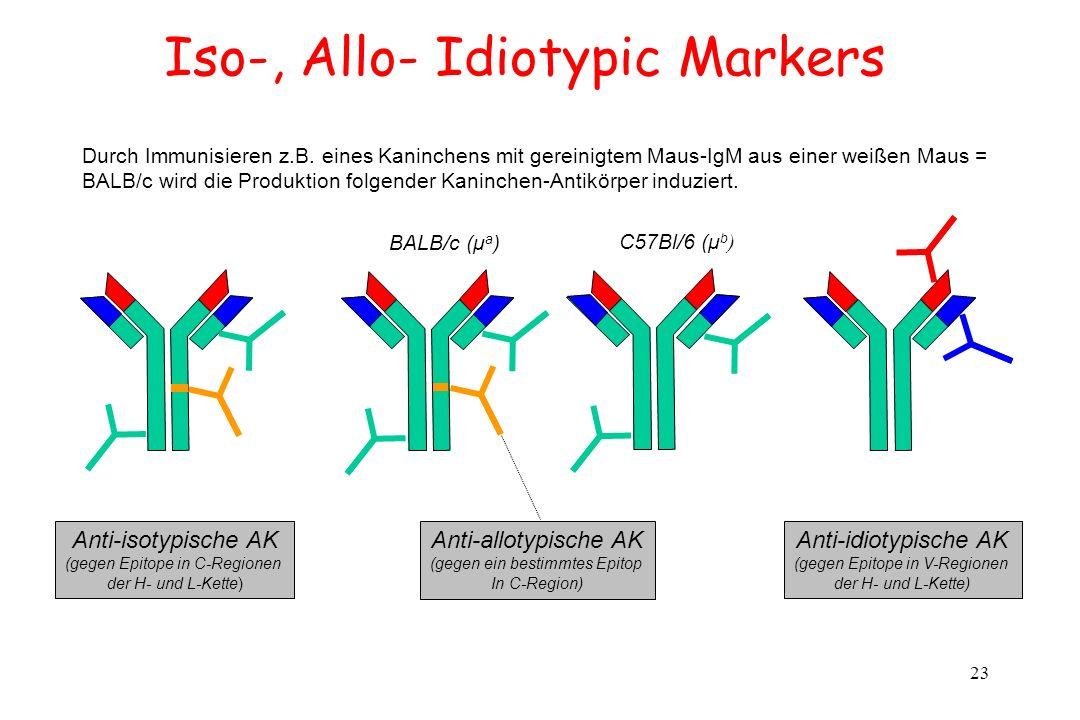 23 Iso-, Allo- Idiotypic Markers C57Bl/6 (μ b ) Durch Immunisieren z.B. eines Kaninchens mit gereinigtem Maus-IgM aus einer weißen Maus = BALB/c wird