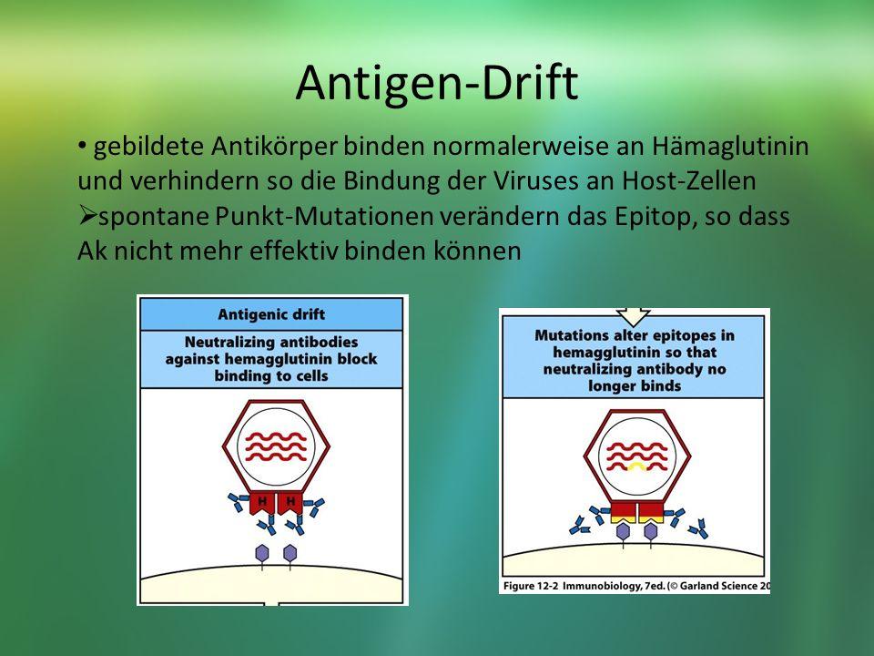 Antigen-Drift gebildete Antikörper binden normalerweise an Hämaglutinin und verhindern so die Bindung der Viruses an Host-Zellen spontane Punkt-Mutationen verändern das Epitop, so dass Ak nicht mehr effektiv binden können