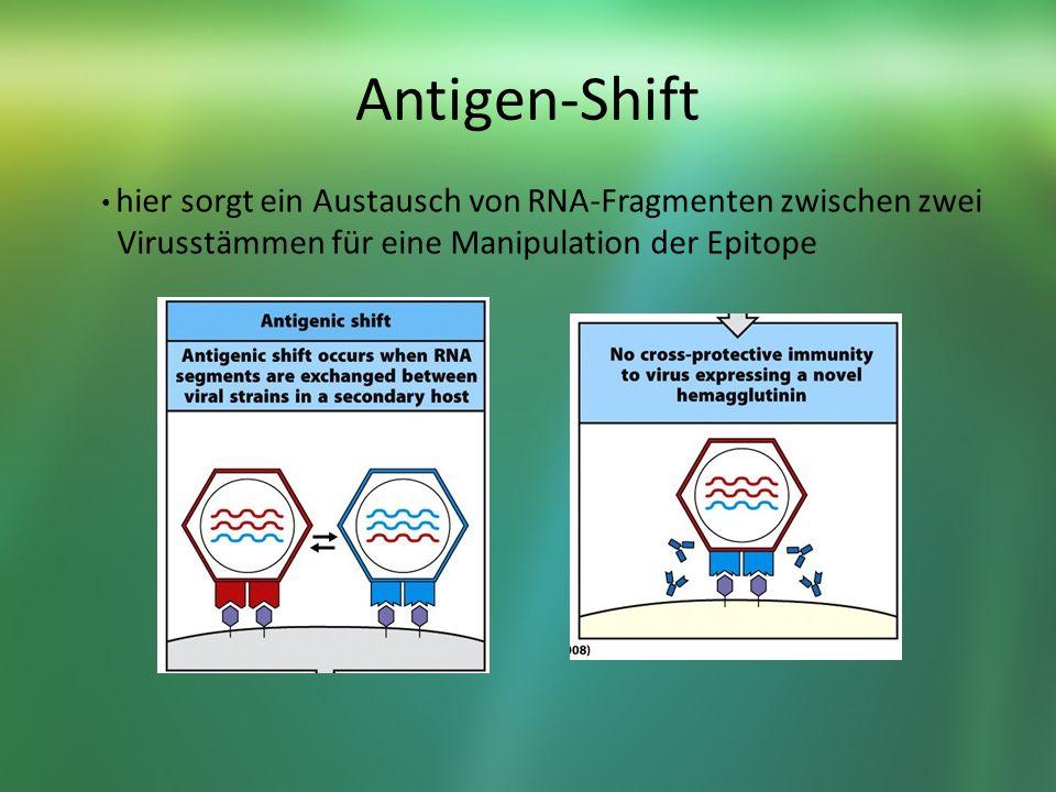 Antigen-Shift hier sorgt ein Austausch von RNA-Fragmenten zwischen zwei Virusstämmen für eine Manipulation der Epitope