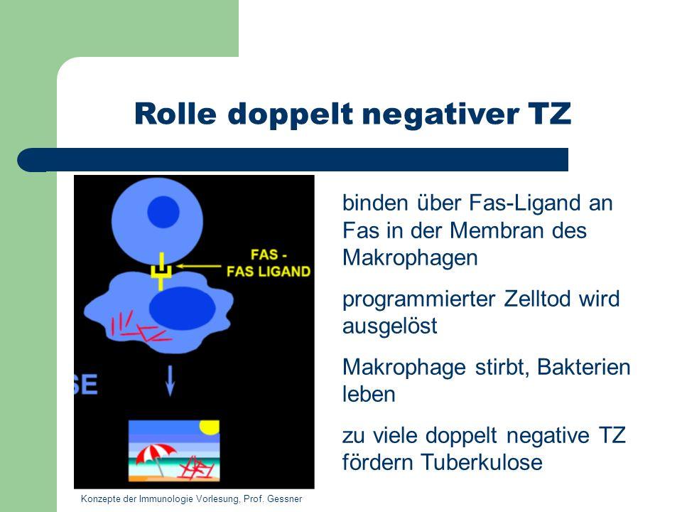 Rolle doppelt negativer TZ binden über Fas-Ligand an Fas in der Membran des Makrophagen programmierter Zelltod wird ausgelöst Makrophage stirbt, Bakte