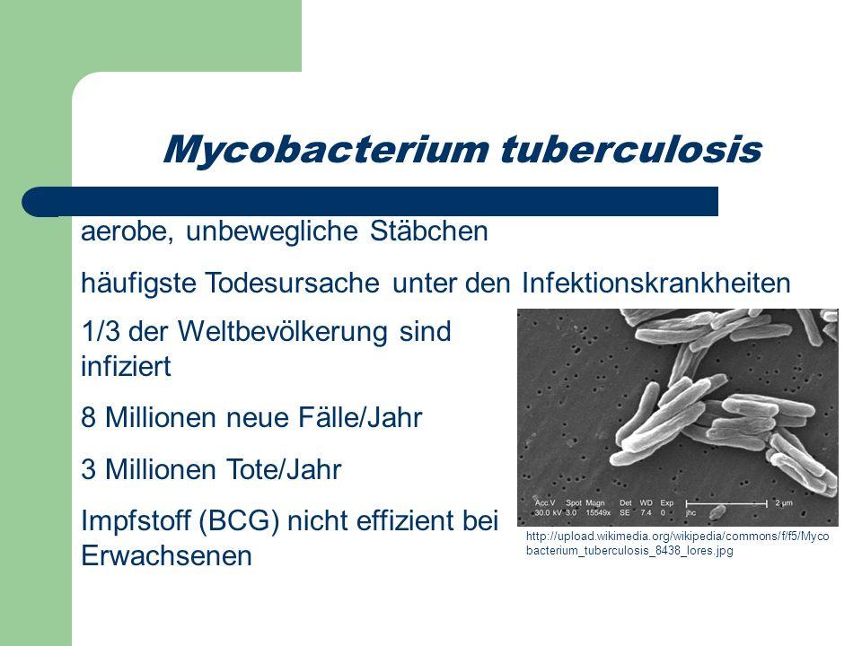 Mycobacterium tuberculosis aerobe, unbewegliche Stäbchen häufigste Todesursache unter den Infektionskrankheiten http://upload.wikimedia.org/wikipedia/