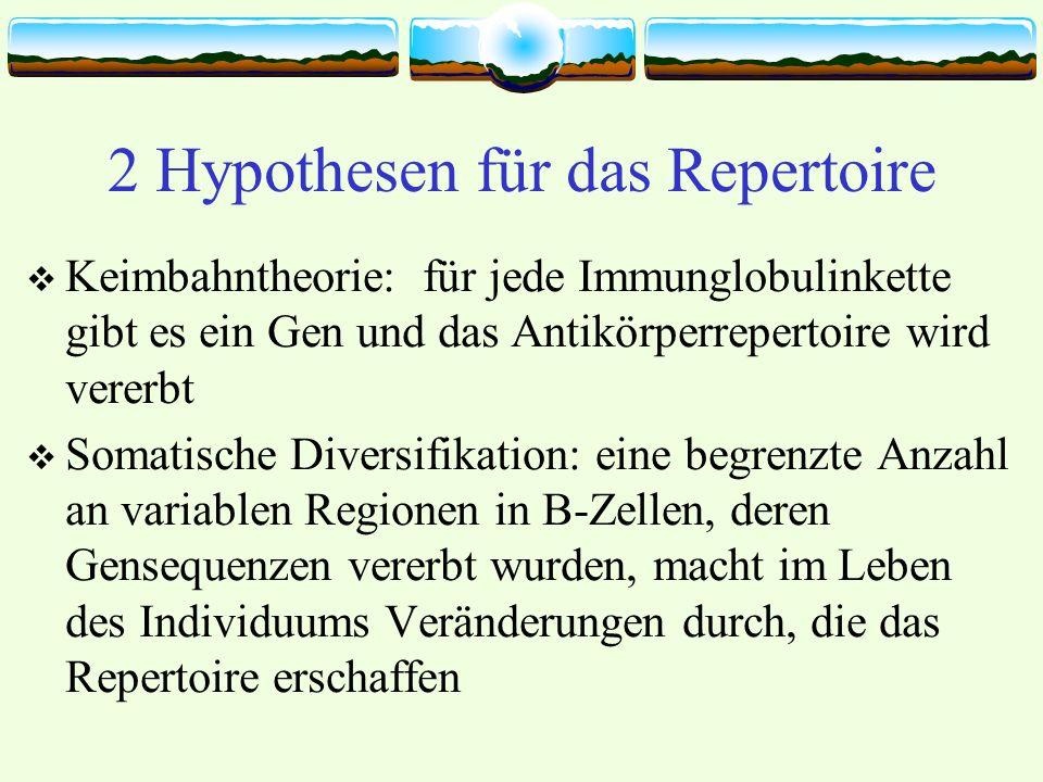 2 Hypothesen für das Repertoire Keimbahntheorie: für jede Immunglobulinkette gibt es ein Gen und das Antikörperrepertoire wird vererbt Somatische Diversifikation: eine begrenzte Anzahl an variablen Regionen in B-Zellen, deren Gensequenzen vererbt wurden, macht im Leben des Individuums Veränderungen durch, die das Repertoire erschaffen