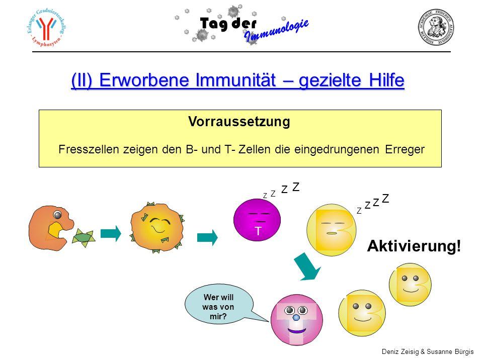 (II) Erworbene Immunität – gezielte Hilfe Vorraussetzung Fresszellen zeigen den B- und T- Zellen die eingedrungenen Erreger Aktivierung! Tag der Immun