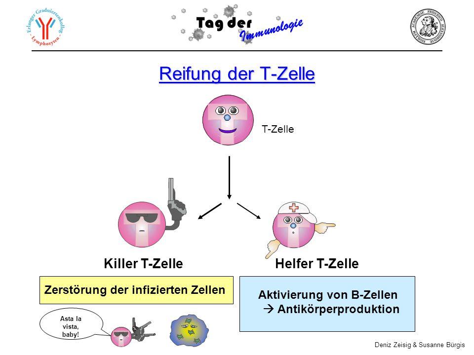 Reifung der T-Zelle Aktivierung von B-Zellen Antikörperproduktion Zerstörung der infizierten Zellen T-Zelle Killer T-Zelle Helfer T-Zelle Tag der Immunologie Deniz Zeisig & Susanne Bürgis Asta la vista, baby!