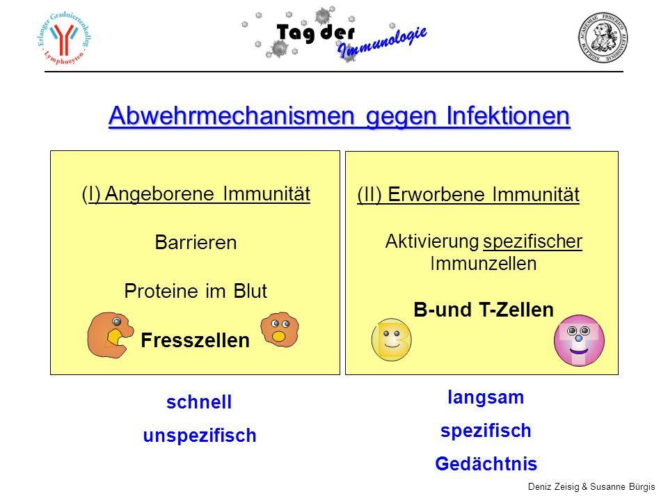 Abwehrmechanismen gegen Infektionen (I) Angeborene Immunität Barrieren Proteine im Blut Fresszellen (II) Erworbene Immunität Aktivierung spezifischer