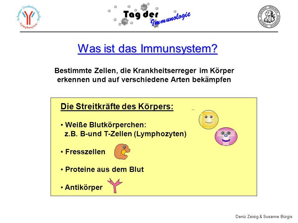 Abwehrmechanismen gegen Infektionen (I) Angeborene Immunität Barrieren Proteine im Blut Fresszellen (II) Erworbene Immunität Aktivierung spezifischer Immunzellen B-und T-Zellen Tag der Immunologie Deniz Zeisig & Susanne Bürgis