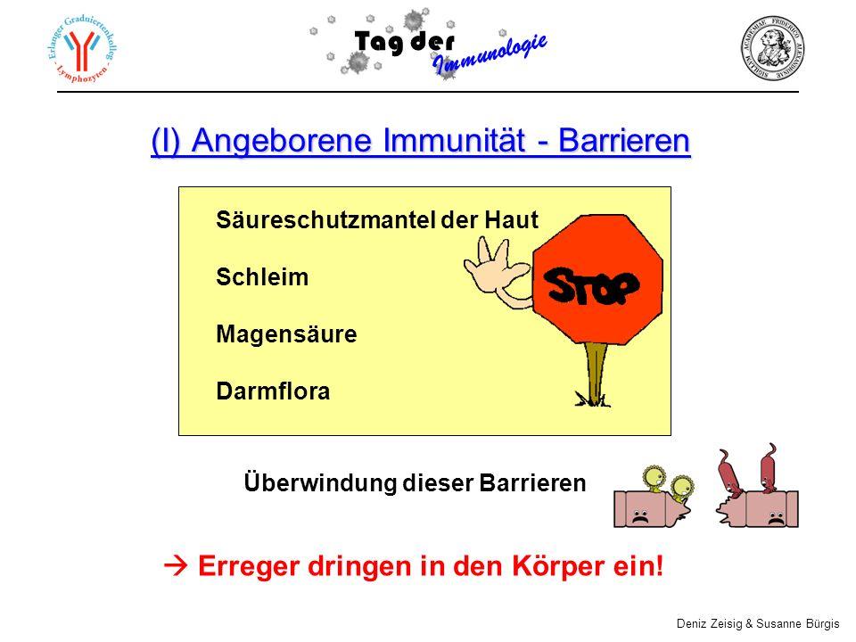 (I) Angeborene Immunität - Barrieren Säureschutzmantel der Haut Schleim Magensäure Darmflora Tag der Immunologie Deniz Zeisig & Susanne Bürgis Erreger dringen in den Körper ein.