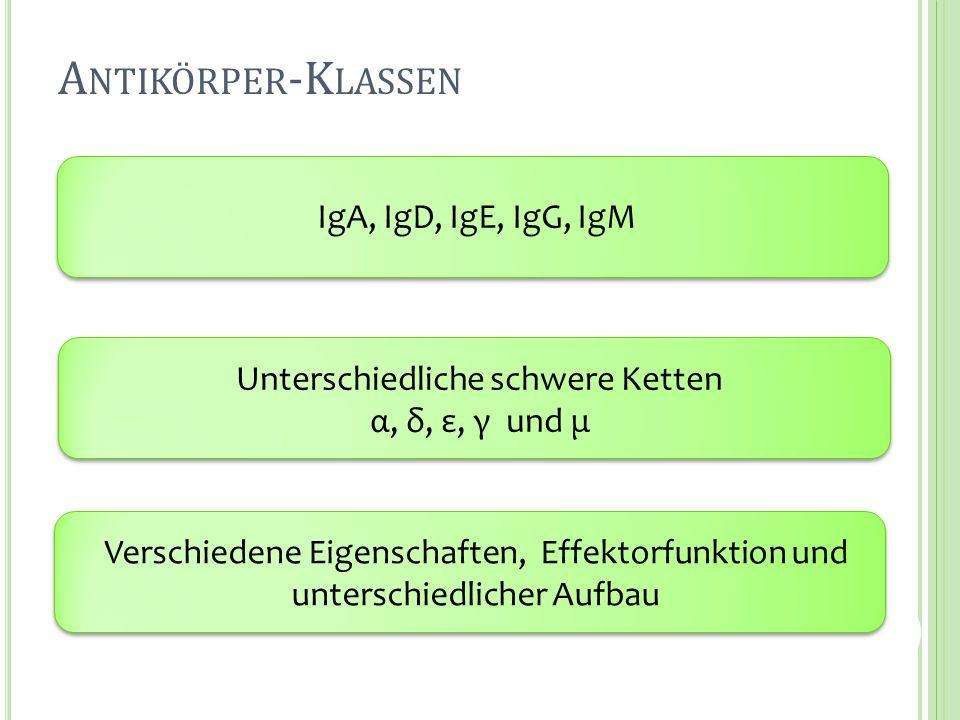 A NTIKÖRPER -K LASSEN IgA, IgD, IgE, IgG, IgM Unterschiedliche schwere Ketten α, δ, ε, γ und μ Verschiedene Eigenschaften, Effektorfunktion und unters
