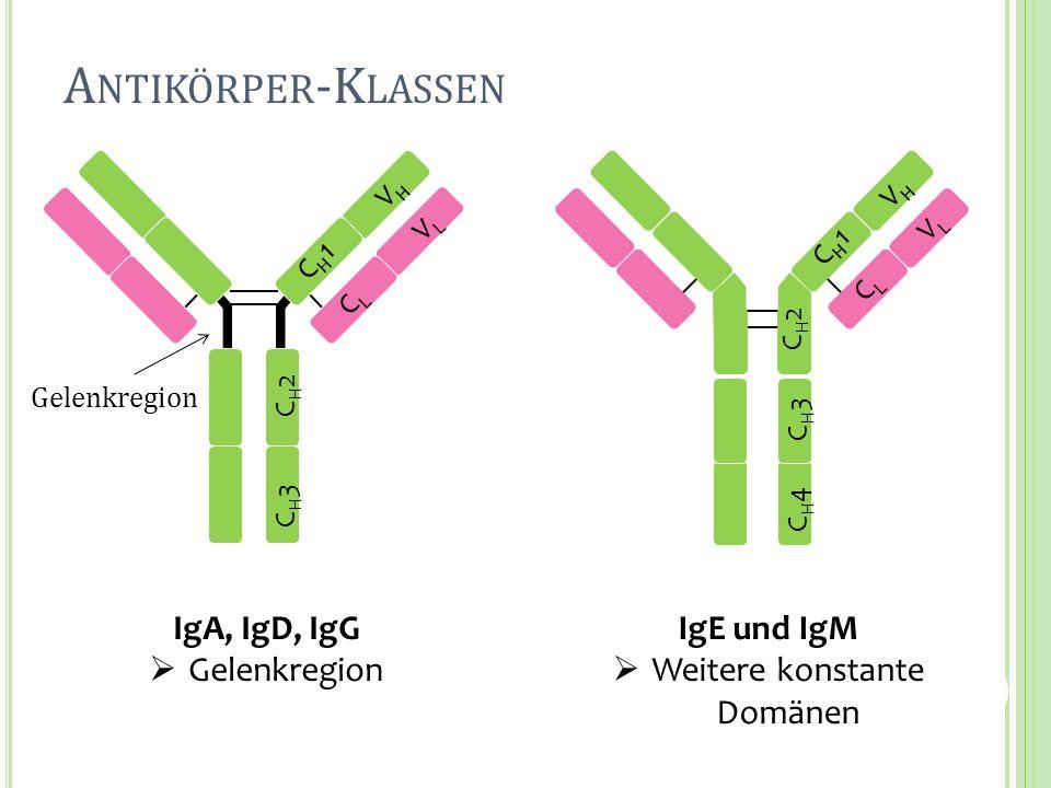 Gelenkregion IgA, IgD, IgG Gelenkregion IgE und IgM Weitere konstante Domänen CH1CH1 VHVH CH2CH2 CH3CH3 CLCL VLVL CH1CH1 VHVH CH3CH3 CH4CH4 CLCL VLVL