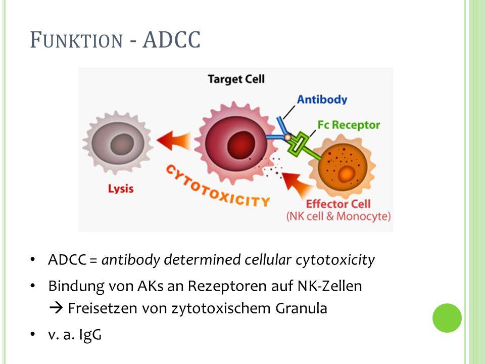 F UNKTION - ADCC ADCC = antibody determined cellular cytotoxicity Bindung von AKs an Rezeptoren auf NK-Zellen Freisetzen von zytotoxischem Granula v.