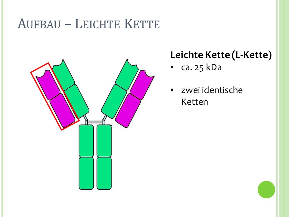 Leichte Kette (L-Kette) ca. 25 kDa zwei identische Ketten A UFBAU – L EICHTE K ETTE