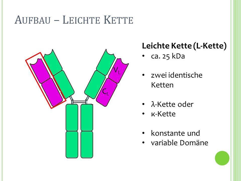Schwere Kette (H-Kette) ca. 50 kDa zwei identische Ketten A UFBAU – S CHWERE K ETTE