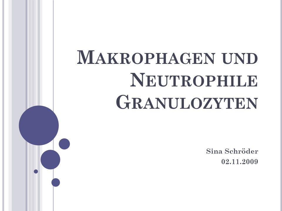 M AKROPHAGEN UND N EUTROPHILE G RANULOZYTEN Sina Schröder 02.11.2009