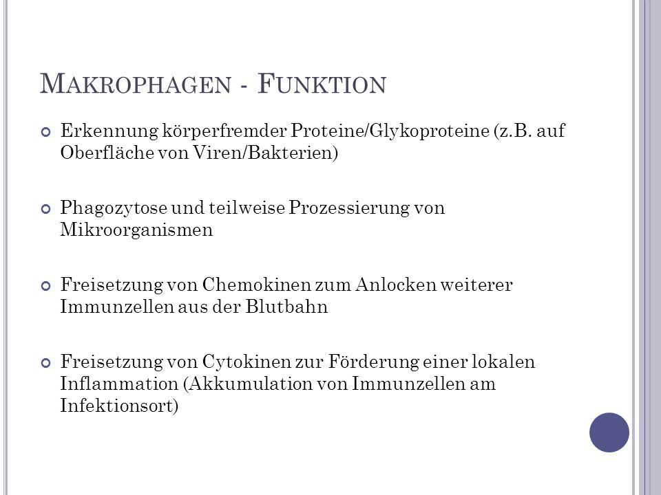 Erkennung körperfremder Proteine/Glykoproteine (z.B. auf Oberfläche von Viren/Bakterien) Phagozytose und teilweise Prozessierung von Mikroorganismen F