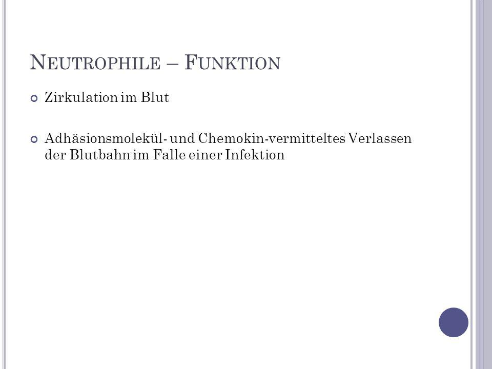 N EUTROPHILE – F UNKTION Zirkulation im Blut Adhäsionsmolekül- und Chemokin-vermitteltes Verlassen der Blutbahn im Falle einer Infektion