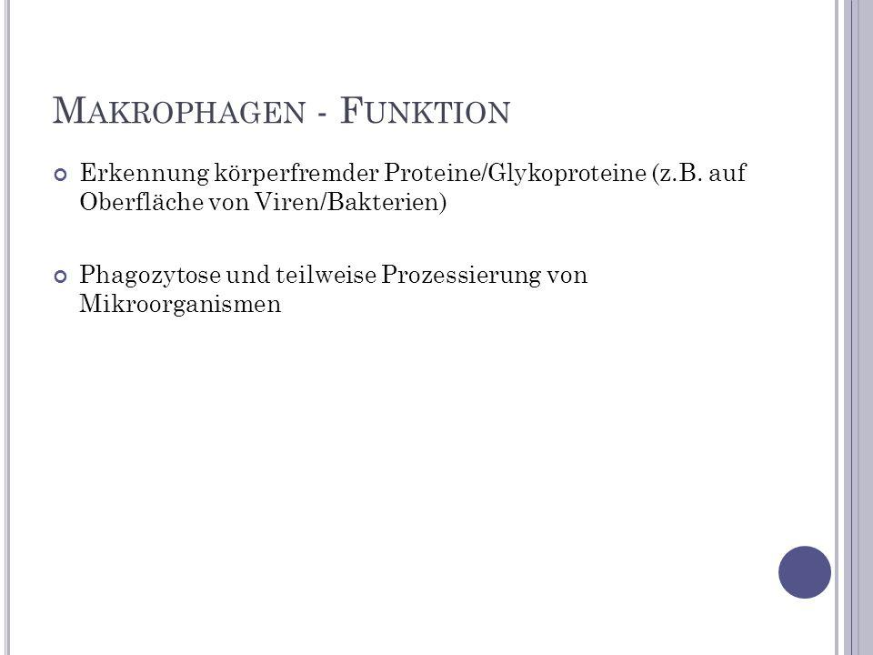 M AKROPHAGEN - F UNKTION Erkennung körperfremder Proteine/Glykoproteine (z.B. auf Oberfläche von Viren/Bakterien) Phagozytose und teilweise Prozessier