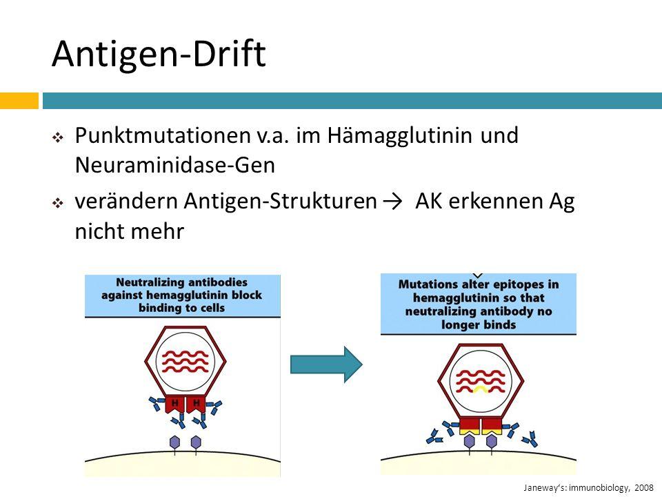 Antigen-Drift Punktmutationen v.a. im Hämagglutinin und Neuraminidase-Gen verändern Antigen-Strukturen AK erkennen Ag nicht mehr Janeways: immunobiolo
