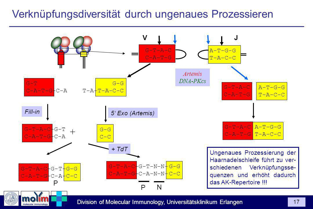 Division of Molecular Immunology, Universitätsklinikum Erlangen 17 G-T-A-C C-A-T-G A-T-G-G T-A-C-C G-T-A-C C-A-T-G A-T-G-G T-A-C-C G-T-A-C C-A-T-G A-T