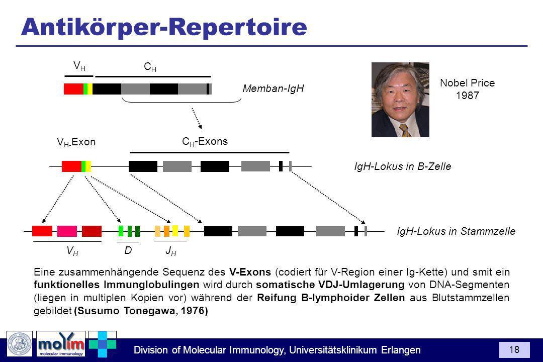 Division of Molecular Immunology, Universitätsklinikum Erlangen 18 IgH-Lokus in Stammzelle IgH-Lokus in B-Zelle Memban-IgH C H -Exons VHVH CHCH V H- Exon Eine zusammenhängende Sequenz des V-Exons (codiert für V-Region einer Ig-Kette) und smit ein funktionelles Immunglobulingen wird durch somatische VDJ-Umlagerung von DNA-Segmenten (liegen in multiplen Kopien vor) während der Reifung B-lymphoider Zellen aus Blutstammzellen gebildet (Susumo Tonegawa, 1976) Antikörper-Repertoire Nobel Price 1987 V H D J H