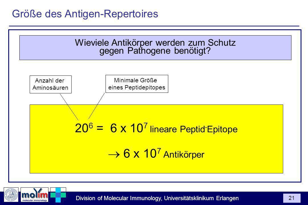 Division of Molecular Immunology, Universitätsklinikum Erlangen 21 20 6 = 6 x 10 7 lineare Peptid - Epitope 6 x 10 7 Antikörper Anzahl der Aminosäuren Minimale Größe eines Peptidepitopes Wieviele Antikörper werden zum Schutz gegen Pathogene benötigt.