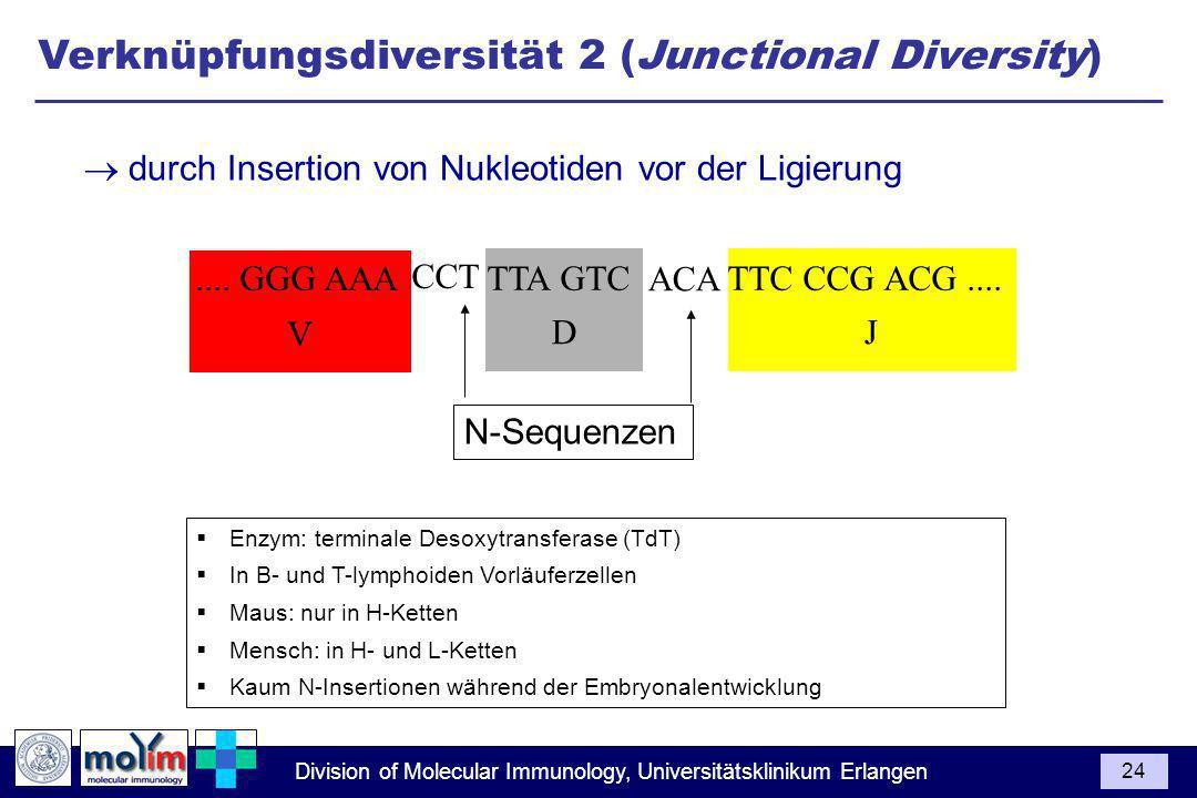 Division of Molecular Immunology, Universitätsklinikum Erlangen 24 JD V.... GGG AAA TTA GTC TTC CCG ACG.... Enzym: terminale Desoxytransferase (TdT) I