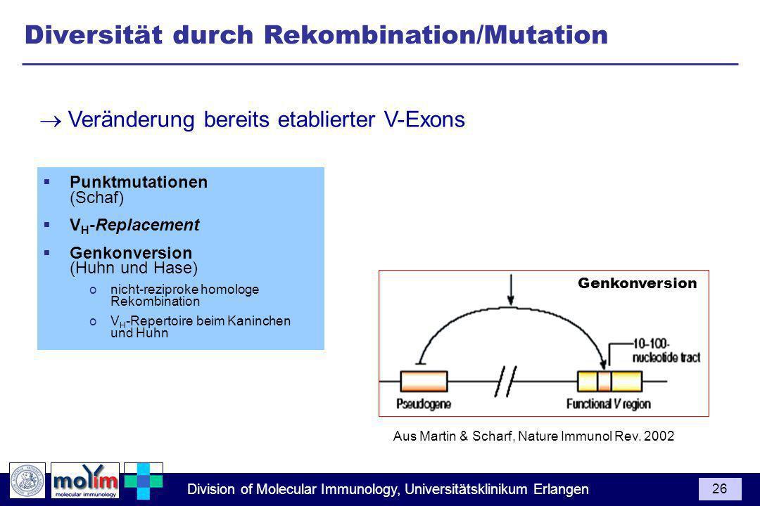 Division of Molecular Immunology, Universitätsklinikum Erlangen 26 Punktmutationen (Schaf) V H -Replacement Genkonversion (Huhn und Hase) onicht-rezip