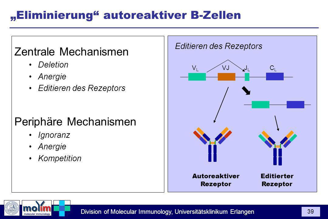 Division of Molecular Immunology, Universitätsklinikum Erlangen 39 Eliminierung autoreaktiver B-Zellen Zentrale Mechanismen Deletion Anergie Editieren des Rezeptors Periphäre Mechanismen Ignoranz Anergie Kompetition V L VJ J L C L Autoreaktiver Rezeptor Editieren des Rezeptors Editierter Rezeptor
