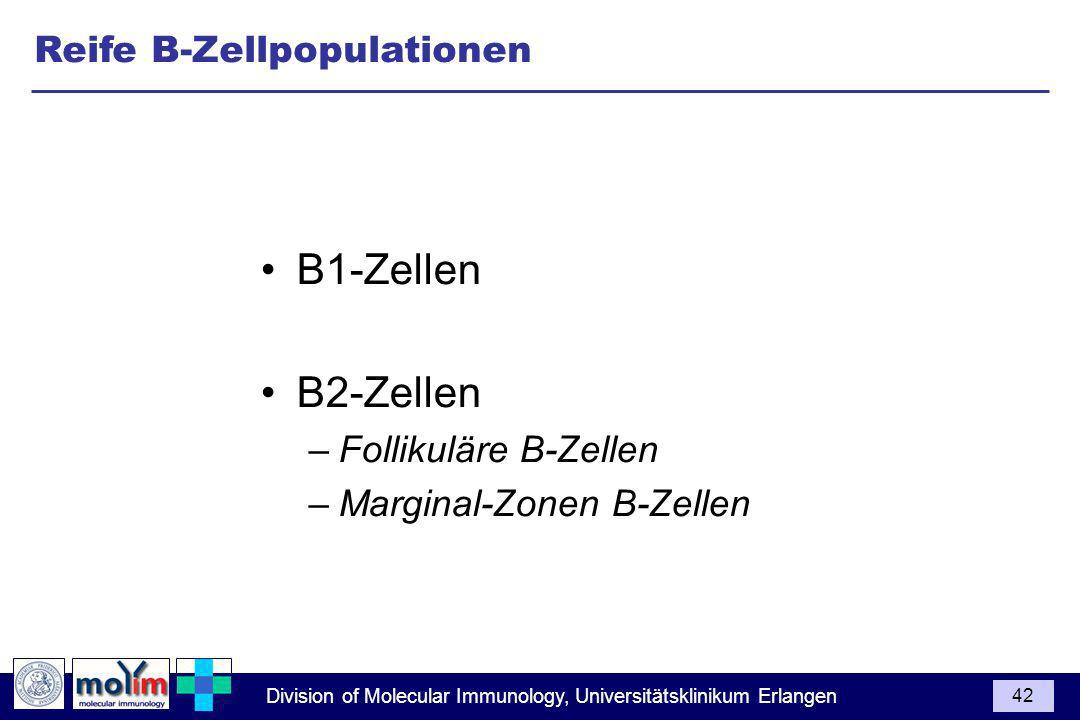 Division of Molecular Immunology, Universitätsklinikum Erlangen 42 B1-Zellen B2-Zellen –Follikuläre B-Zellen –Marginal-Zonen B-Zellen Reife B-Zellpopulationen