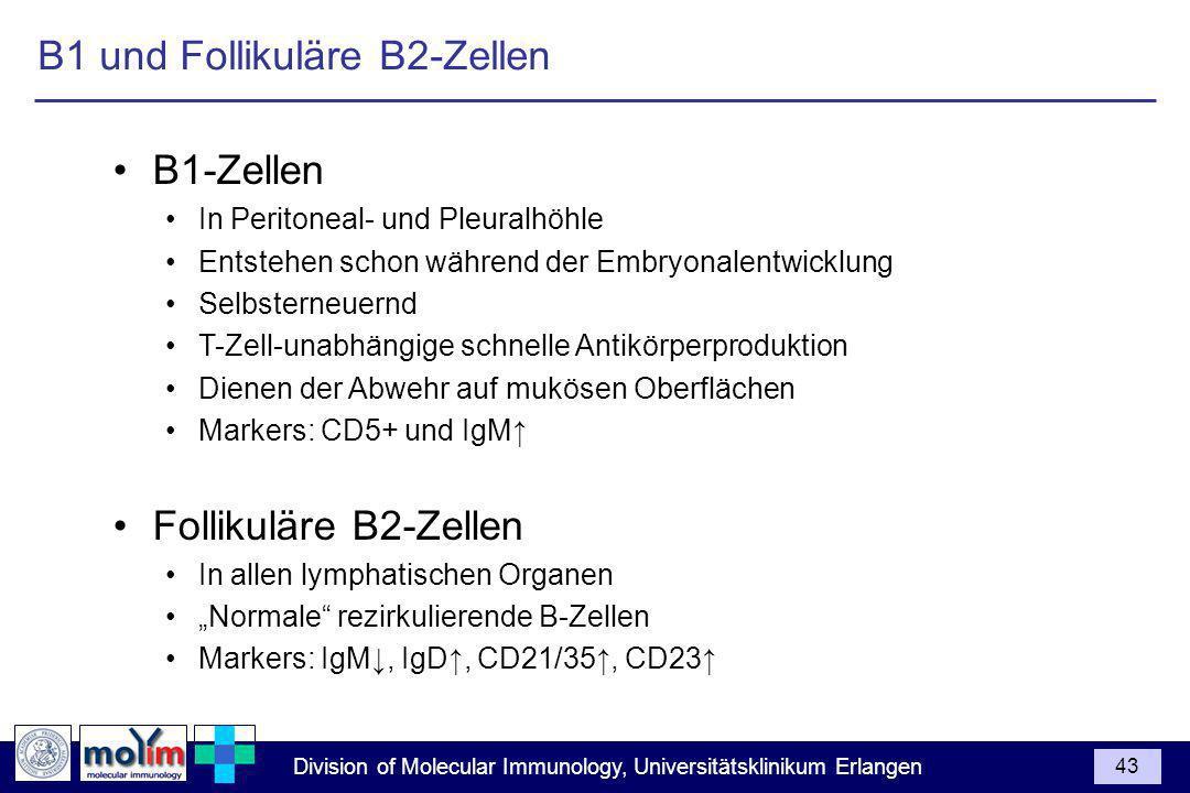 Division of Molecular Immunology, Universitätsklinikum Erlangen 43 B1-Zellen In Peritoneal- und Pleuralhöhle Entstehen schon während der Embryonalentw