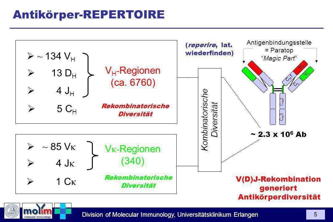 Division of Molecular Immunology, Universitätsklinikum Erlangen 5 ~ 85 V κ V κ- Regionen (340) 4 J κ 1 C κ V H - Regionen (ca. 6760) 4 J H 5 C H ~ 134