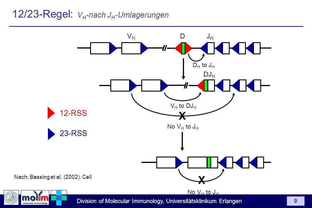 Division of Molecular Immunology, Universitätsklinikum Erlangen 9 Nach: Bassing et al. (2002), Cell D H to J H 23-RSS JHJH DVHVH 12-RSS DJ H V H to DJ