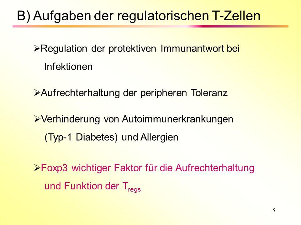 5 B) Aufgaben der regulatorischen T-Zellen Regulation der protektiven Immunantwort bei Infektionen Aufrechterhaltung der peripheren Toleranz Verhinderung von Autoimmunerkrankungen (Typ-1 Diabetes) und Allergien Foxp3 wichtiger Faktor für die Aufrechterhaltung und Funktion der T regs